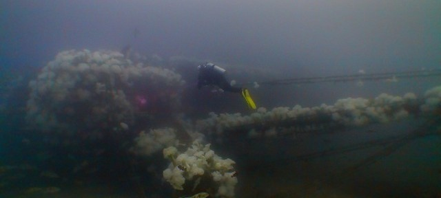 Since sinking on Nov. 26, 2005, the A.C.E. has become a healthy artificial reef, attracting a wide variety of sea life. Photo: Boonchob Vijarnsorn