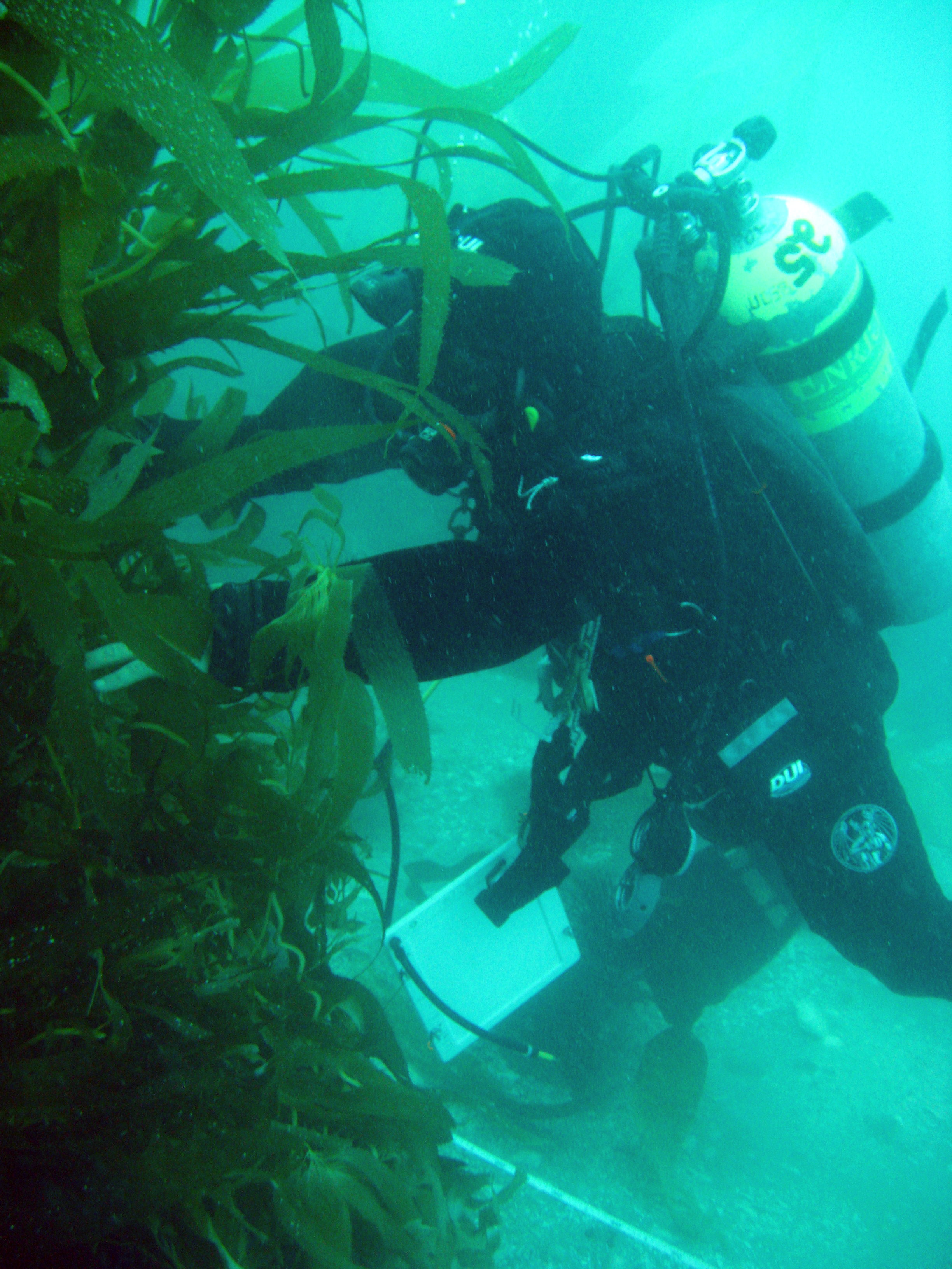 A diver conducts a study of the Wheeler North Reef. Photo Courtesy of UC Santa Barbara