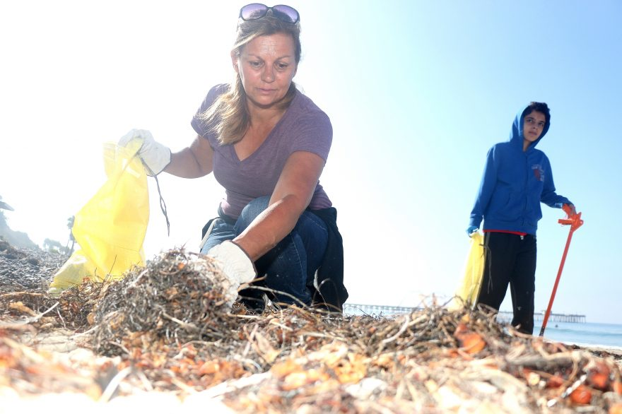 Rose DeLloye, left, scours some seaweed for debris on Saturday, Sept. 17, near the San Clemente Pier as Muhammad Alhuwaimani walks up the beach during Coastal Cleanup Day. Photo: Eric Heinz
