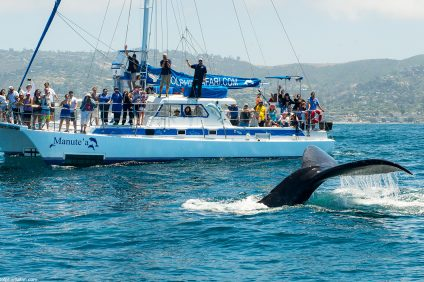 Festival of Whales takes place March 4, 5, 11 and 12. Photo: File