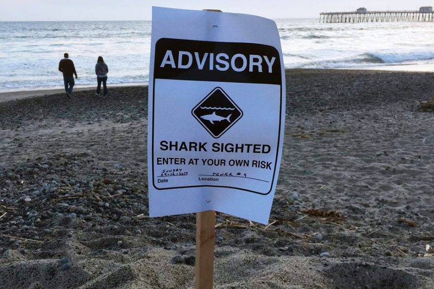 Sharks have recently been spotted from Upper Trestles to the Pier. Photo: Jake Howard