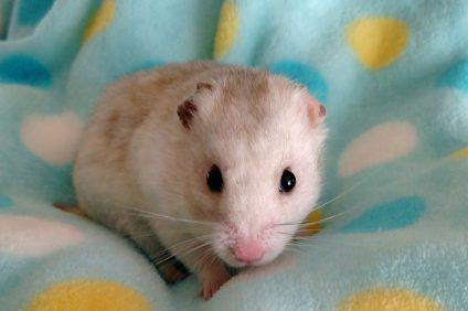 Pet of the Week: Frank