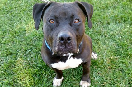 Chico. Photo: Courtesy of the San Clemente/Dana Point Animal Shelter