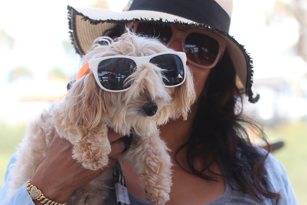 Sunglasses provided at the San Clemente Times booth were used by humans and animals, apparently. Photo: Eric Heinz
