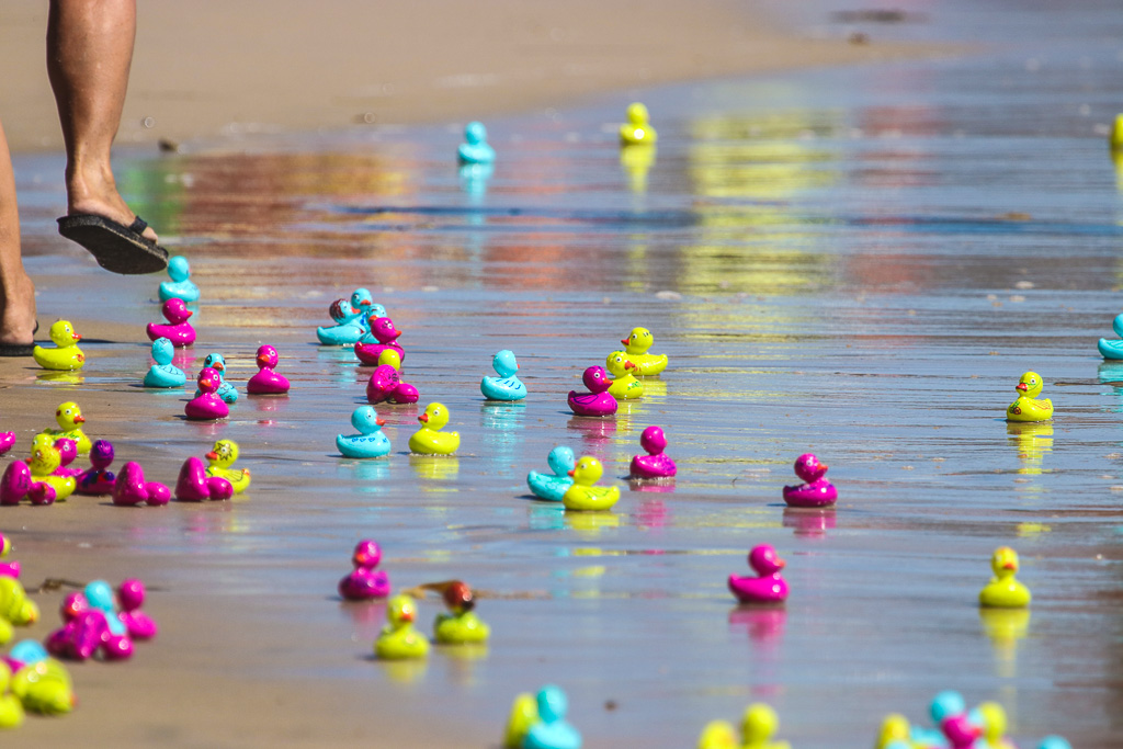 There's something obsessive about   Ocean Festival's annual Rubber Duck Race that has people eager to grab up the colorful mallards. Photo: Eric Heinz