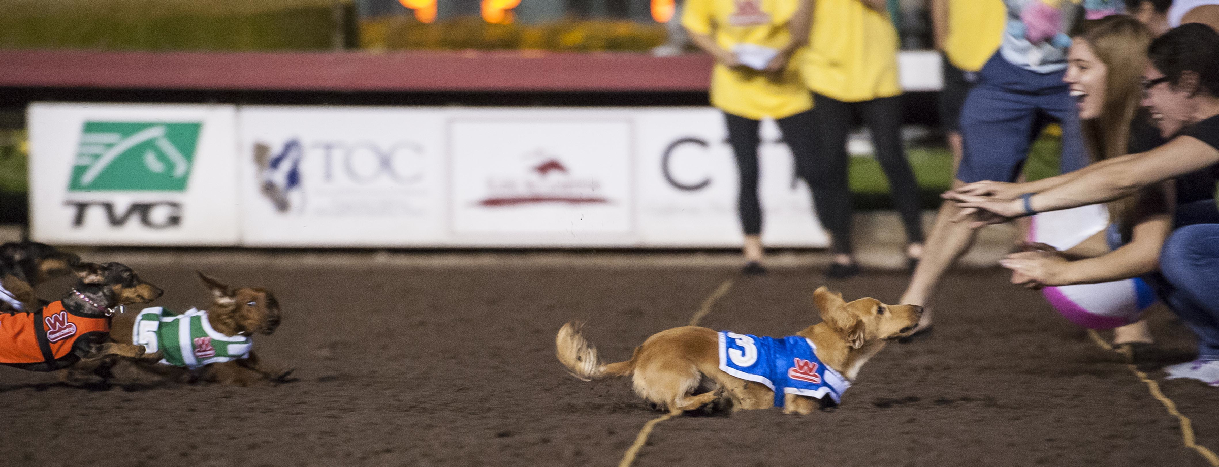 Finn races in the 2015 Wienerschnitzel Wiener Nationals at Los Alamitos Race Course. Finn won the 2015 title and is looking to get back on top in 2018. Photo: Courtesy