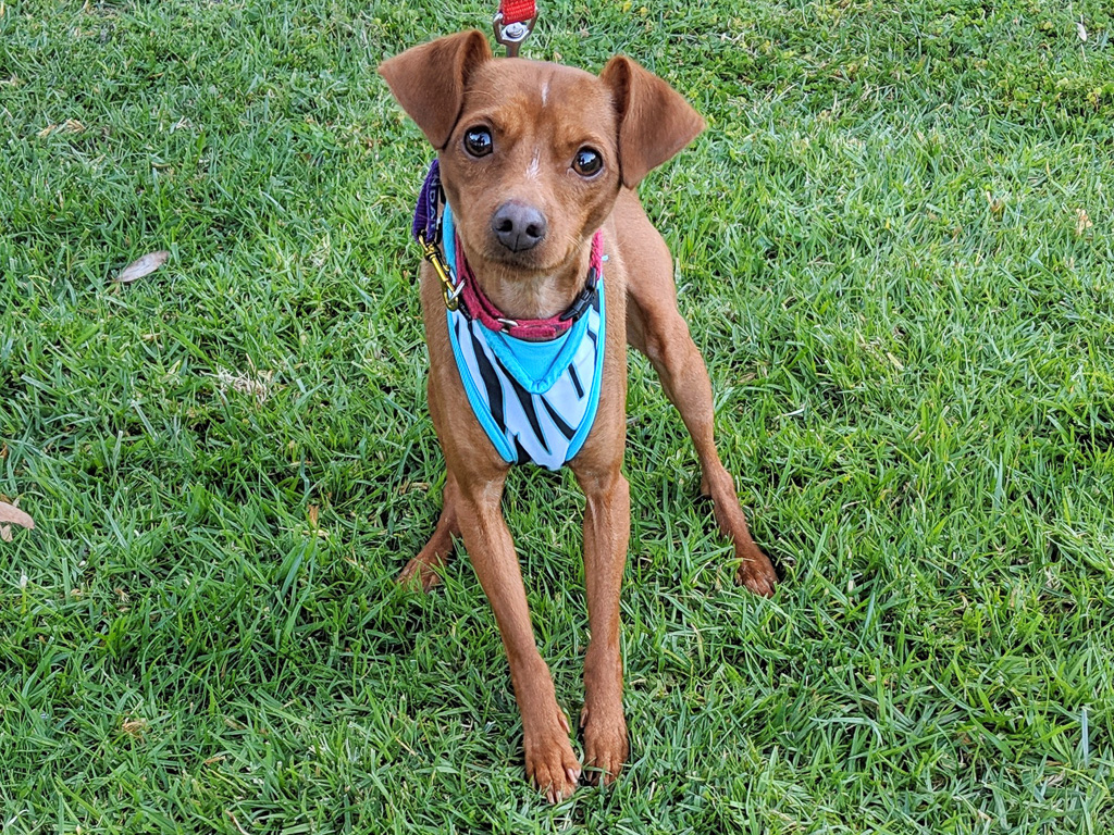 Mr. Burns. Photo: Courtesy of the San Clemente/Dana Point Animal Shelter