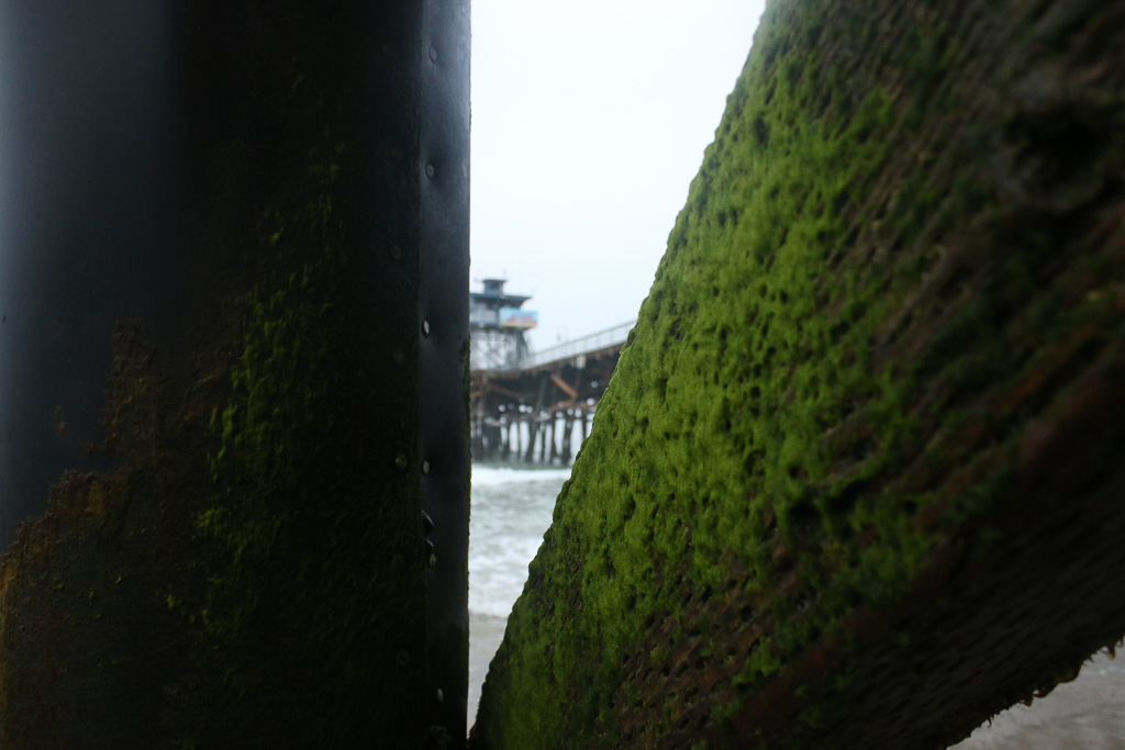 Green algae is commonly seen around the base of the Pier, exposed during high tides, but it is not necessarily contaminated. City officials said physical attributes of the Pier will be part of the microbial study. Photo: Eric Heinz