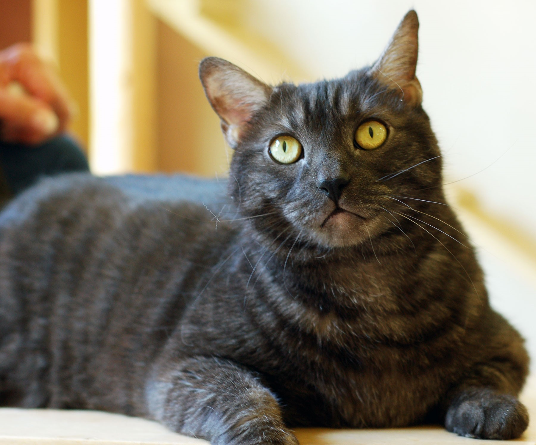 Uzo. Photo: Courtesy of the San Clemente/Dana Point Animal Shelter