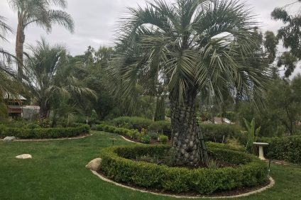 A garden in San Juan Capistrano.  Photo by Freda D'Souza