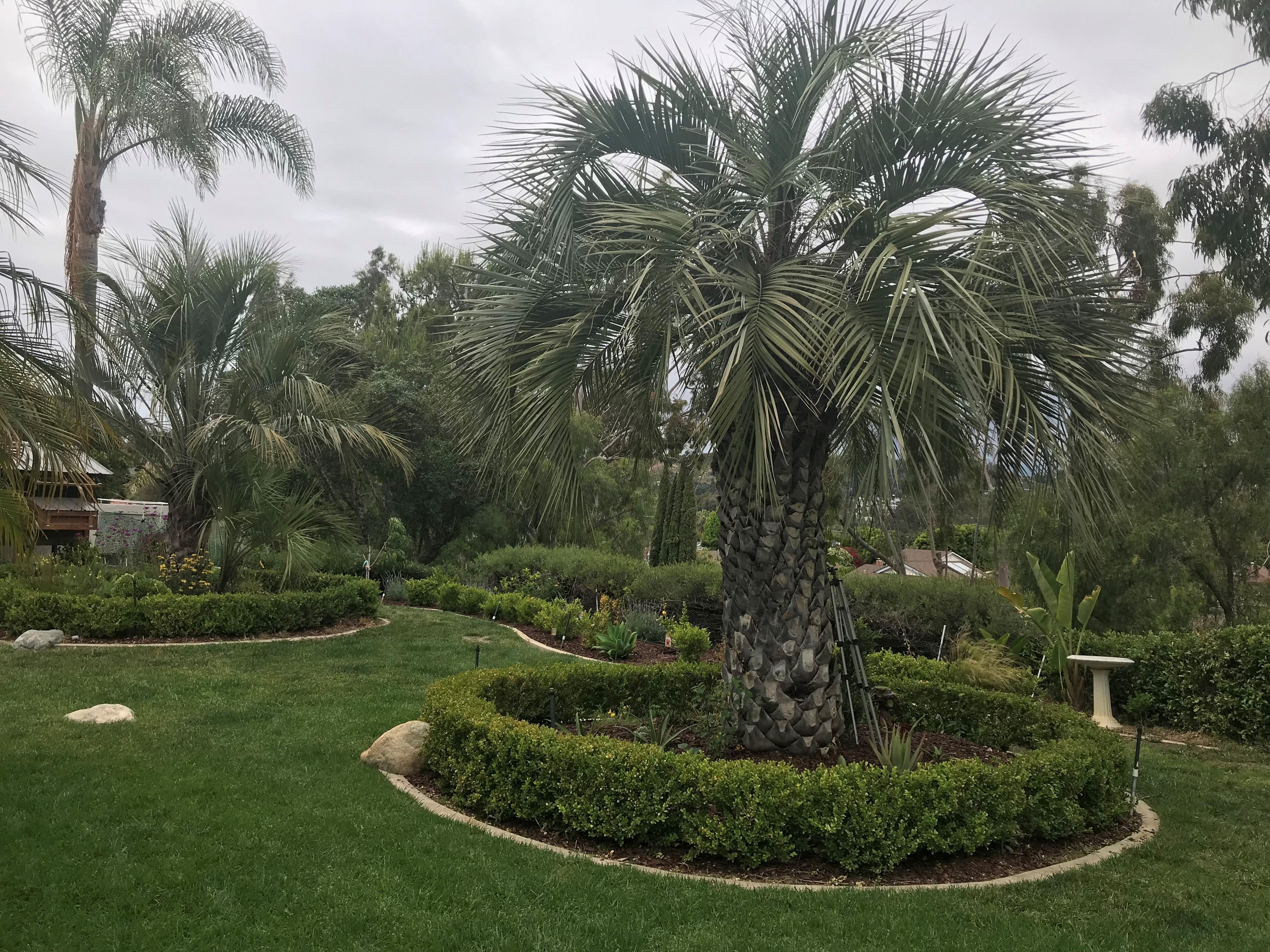 A garden in San Juan Capistrano.  Photo by Freda D'Souza