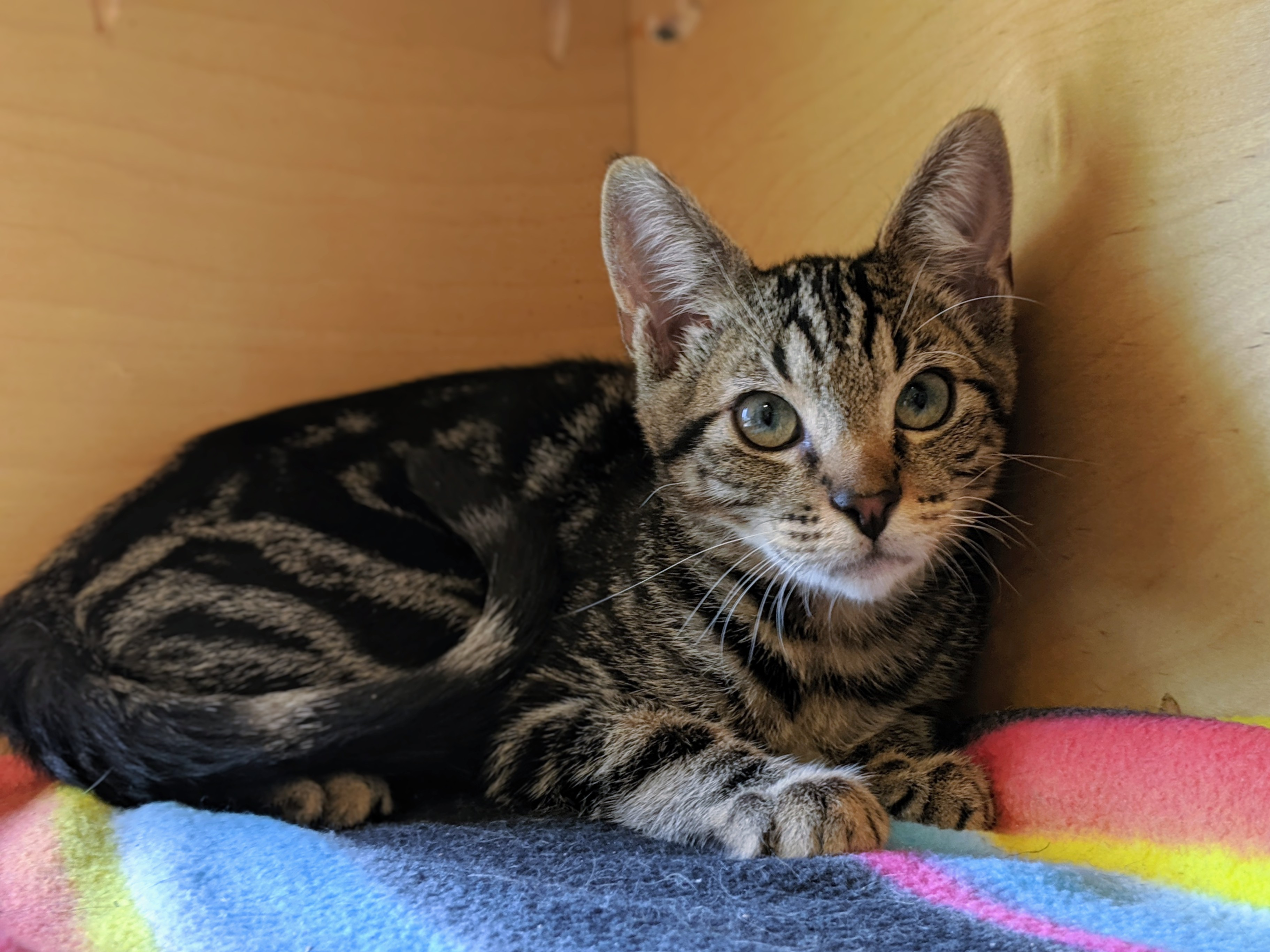 Karl. Photo: Courtesy of San Clemente/Dana Point Animal Shelter.