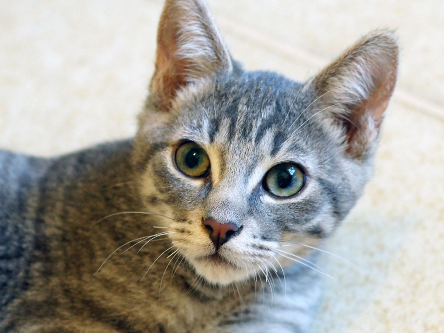 Gianni. Photo: Courtesy of San Clemente/Dana Point Animal Shelter